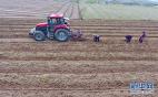 唐山:中草藥飄香富農家