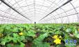 """河北""""林安行动""""沧州启动 促进林果产业健康发展"""