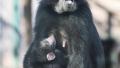 动物家族不断壮大 郑州市动物园全年新添动物296只