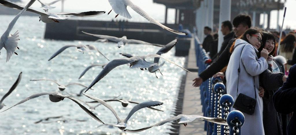 青岛:冬日栈桥观海鸥