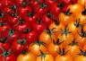圣女果才是最原始的番茄 二者营养价值无异