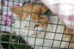 小猫被困高架桥缝隙 老人扔食两年上千次