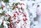 山王坪绝美雪景