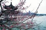 """下周三起杭州最高温将攀升至15℃+,虽未入春""""春意浓"""""""