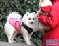 济南发布养犬通告 外出遛狗时狗绳最长1.5米