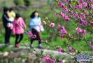 阳春三月唯春光与花海不可辜负 青岛这几个村火了