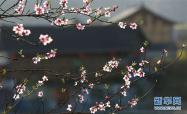 圆明园踏春节开幕 游客可赏古丁香听昆曲