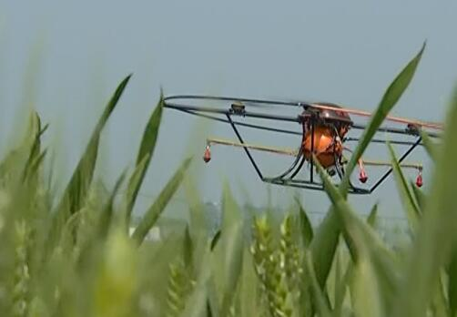 """西华县免费为114个贫困村50万亩小麦""""飞防"""""""