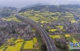 筑牢乡村振兴基石 十二项工程为山东农业保驾护航