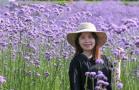 紫色花海迎风盛开