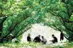 注意!郑州樱桃沟里的樱桃熟啦 问君来不来