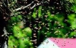 养蜂人老李连续21年来青岛采蜜 看