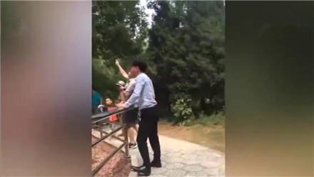 """网曝""""北京野生动物园游客用石子打老虎"""""""