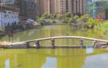 温州清代桥遭人为损毁后修复:五孔变四孔,介绍牌出低级错误