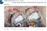 """鱼贩为鱼粘上塑料假眼睛""""装新鲜"""" 网友笑到崩溃"""