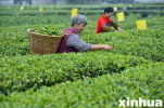 阜城以农业种植结构调整加快乡村振兴步伐