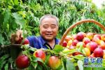 17亩油桃滞销 志愿者帮农户解燃眉之急