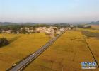 河北将建6个鲜食玉米商业化种植基地及示范园区