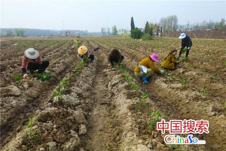 河南光山: 种植蔬菜让社会各界人士感受农耕文化