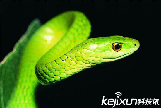 动物世界十大最美动物:没想到它也入选了