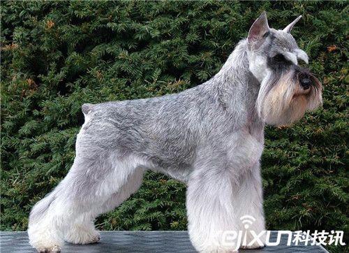 世界十大最可爱狗狗 萌萌哒比熊犬仅排第八