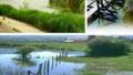 抢救南京湿地资源刻不容缓 重点关注其保护与利用