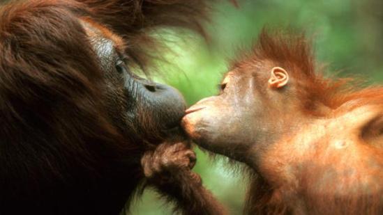 动物之间的母爱
