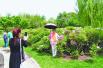 哈尔滨太阳岛花卉园第一季牡丹花盛开迎客