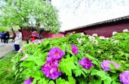 北京故宫今年年内开放面积将增至76%