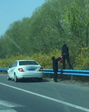 私家车高速应急车道停车 两人踩护栏摘榆钱