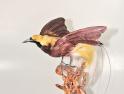 世界最漂亮的鸟