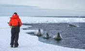 在南极生活15年是怎样的体验