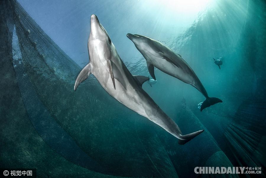 """海豚遭渔网捕捉幸运逃脱 摄影师拍下""""漏网""""瞬间"""