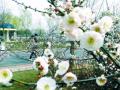三月赏花好去处 郑州市内春季赏花攻略