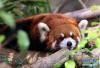 每日一笑:为什么人在冬天特别想睡懒觉?神回复来了