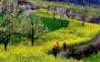 郑州率先进入全域旅游时代 2020年乡村旅游拟进账180亿