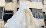 """这里是沈阳不是南极 但窗外站着只""""冻企鹅"""""""