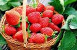 网传的30分钟盐水泡草莓法靠谱吗? 答案请看这里