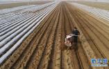 春分将至 各地陆续进入春耕春播春管的农忙时节