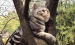 说好的来鸡鸣寺赏樱花,突然出现了一只猫,结果……