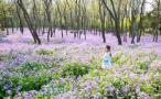 这个春天,你想和谁去看金陵花事?