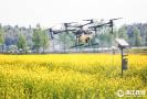 无人机提效率防虫害