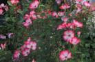 美丽花卉网上卖
