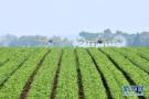 山东制定农业脱贫攻坚工作三年行动实施方案