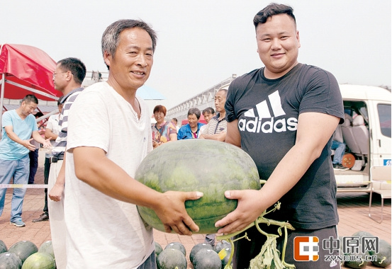 中牟西瓜擂台赛:瓜王63.8斤 需要俩人抬