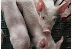 江苏省非洲猪瘟疫区全部解除封锁