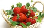 个儿大的草莓会导致儿童性早熟肥胖?