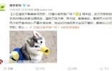 《南京养犬条例》早已出台 未办狗证最高罚款1000元