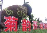 中国开封菊花文化节开幕 21项活动精彩纷呈
