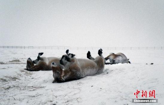 重点保护野生动物